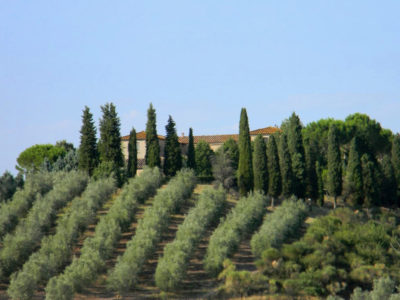 Ref. V65, Historic property in the Val d'Orcia