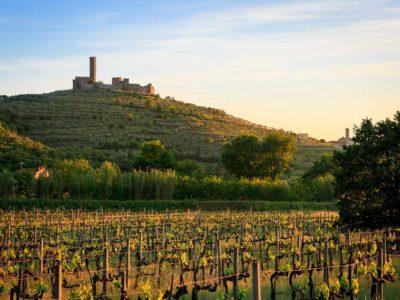 Ref. W61, Cortona, Biodynamic Winery and Agriturismo